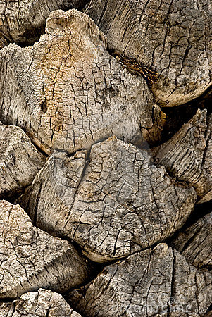 Free Bark Of A Tree-palm Bark Structure Royalty Free Stock Images - 5474919