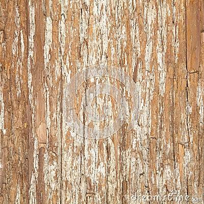 Free Bark Of Elm. Seamless Tileable Texture Stock Photos - 33437973