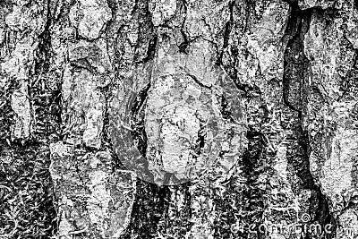 Bark of old tree