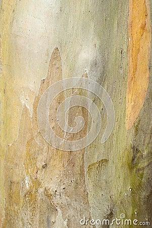 Bark s background