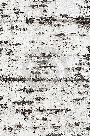 Bark texture #1