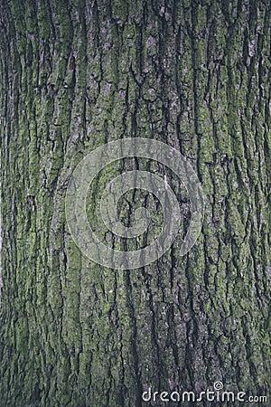 Free Bark Texture 1 Stock Photography - 86305842