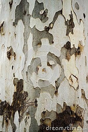 Free Bark Texture Royalty Free Stock Photos - 34702178