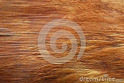 Bark texture of palm tree
