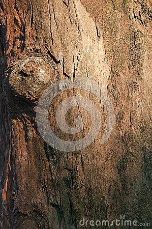 Bark wood tree texture background