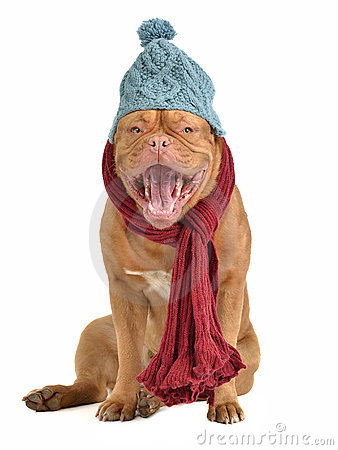 Barking dog with hat and scarf