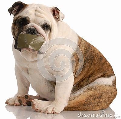 Barking dog problems