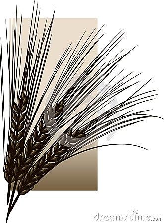 Free Barley Stock Photos - 5439683