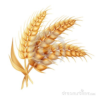 Free Barley Ear With Leaves Realistic Isolated. Wheat Vector Icon Royalty Free Stock Photos - 103084258