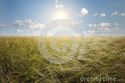 Barley field and wind generator