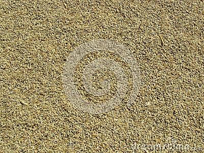 Barley Seeds Background
