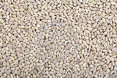 Barley Wheat