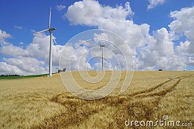 Barley and wind farm