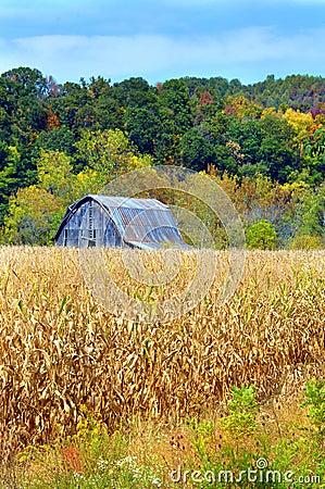 Free Barn And Cornfield Stock Photography - 30837252