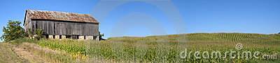 Barn Cornfield Panorama Corn Stalk Field Panoramic