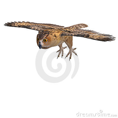 Free Barn Owl Bird Stock Photos - 17747453