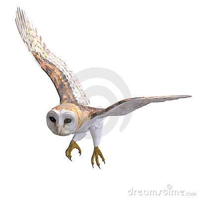 Free Barn Owl Bird. 3D Rendering With Clipping Path Royalty Free Stock Photo - 14729035