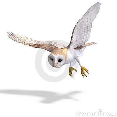 Free Barn Owl Bird. 3D Rendering With Clipping Path Royalty Free Stock Photography - 14746207
