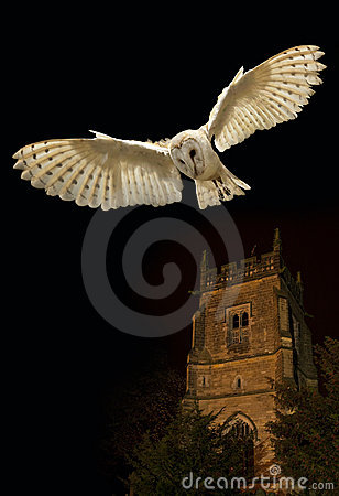 Barn Owl In Flight At Night Stock Photo - Image: 17035090