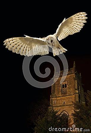 Barn Owl in flight at night