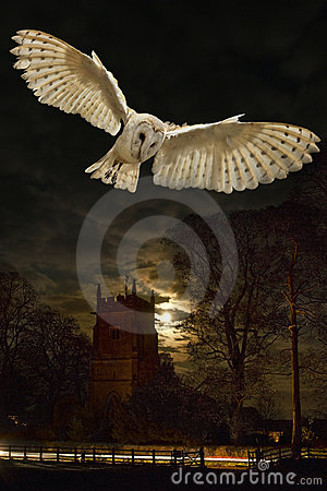 Free Barn Owl In Flight At Night Royalty Free Stock Photos - 14051238