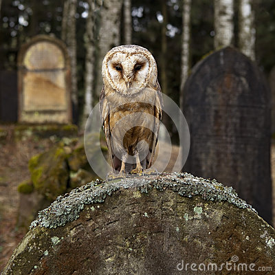 Owl on the tomb