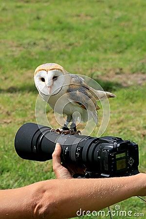 Free Barn Owl Upon A Camera Royalty Free Stock Photo - 3184365