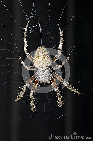 Free Barn Spider On Web Stock Photos - 28325923