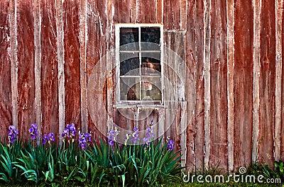 Barn Window Background