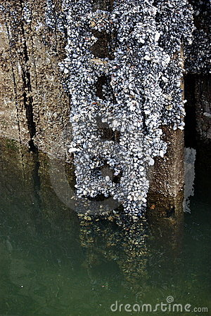 Barnacles and Ladders