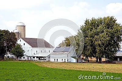 Barns and silos on farm