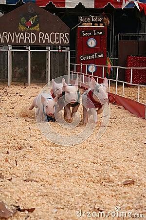 Barnyard pig racers