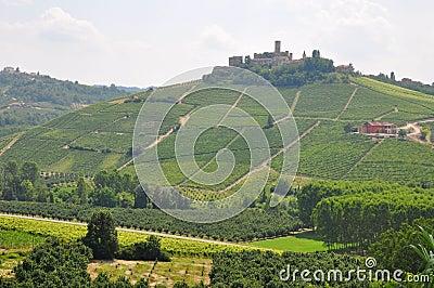 Barolo wine  Alba Piedmont Italy