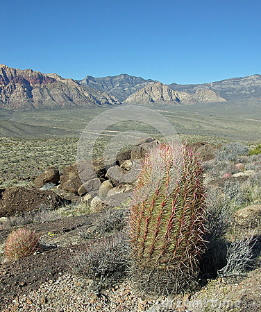 Barrel cactus with scenic view of part of Red Rock Canyon Near Las Vegas, Nevada.
