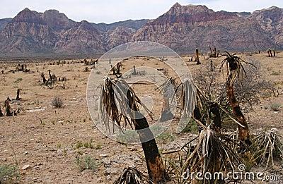 Barren Red Rock Canyon