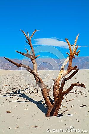 Free Barren Tree Stock Image - 17416011