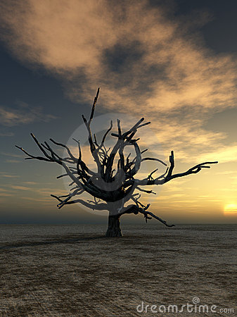Barren Tree 20
