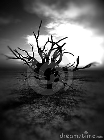 Barren Tree 235