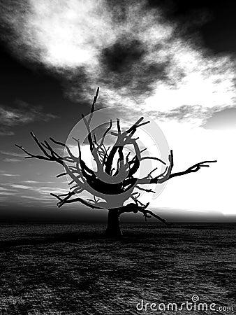 Barren Tree 24