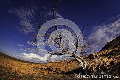 Barren tree in desert