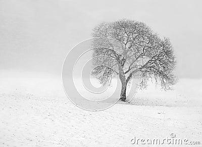 Barren tree in snow