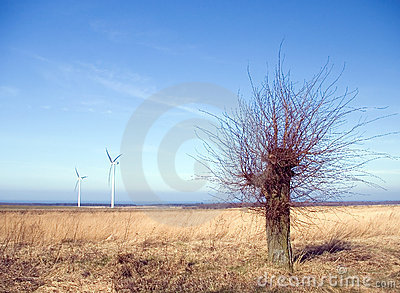 Barren tree, wind turbines
