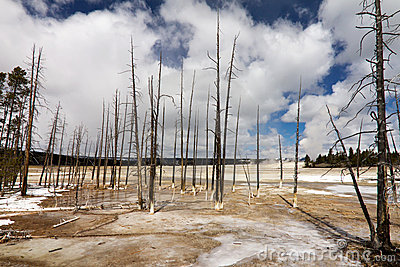 Barren Wasteland of Yellowstone Geyser Field