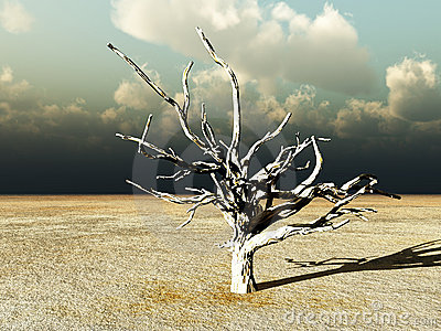 Barren Wilderness 9