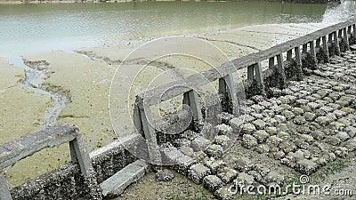 Barrera de la erosión con marea baja