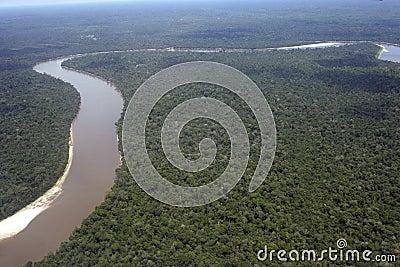 Basenowi Amazon południe America Peru