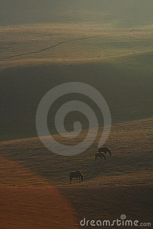 Bashang grassland in Inter-Mongolia  of China