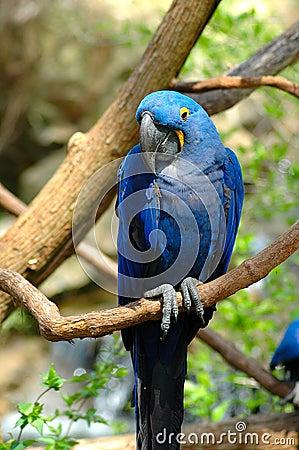 Bashful Bird