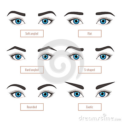 6 Basic Eyebrow Shapes With Captions  Vector Illustration