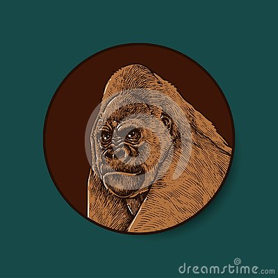 Detailed Hand Drawn Gorilla Illustration Stock Photo
